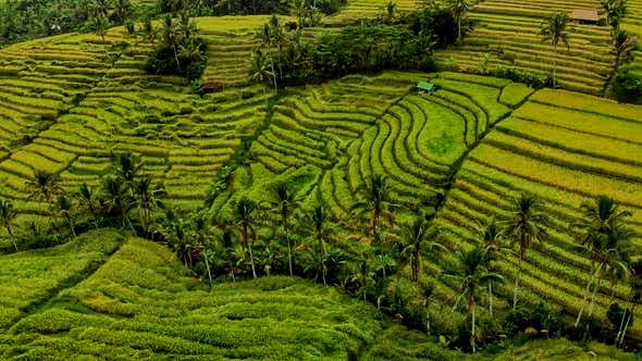 Best Time to Visit Jatiluwih Rice Terrace (Daily & Monthly)