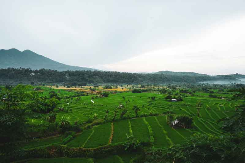 Jatiluwih Rice Terrace Trekking, These are You Must Prepare