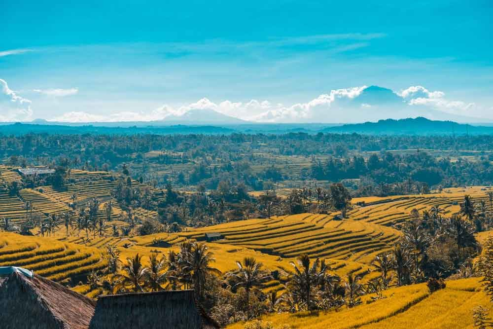 Jatiluwih – The Widest Rice Terrace in Bali Island