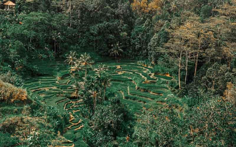 Munduk Rice Terrace Bali