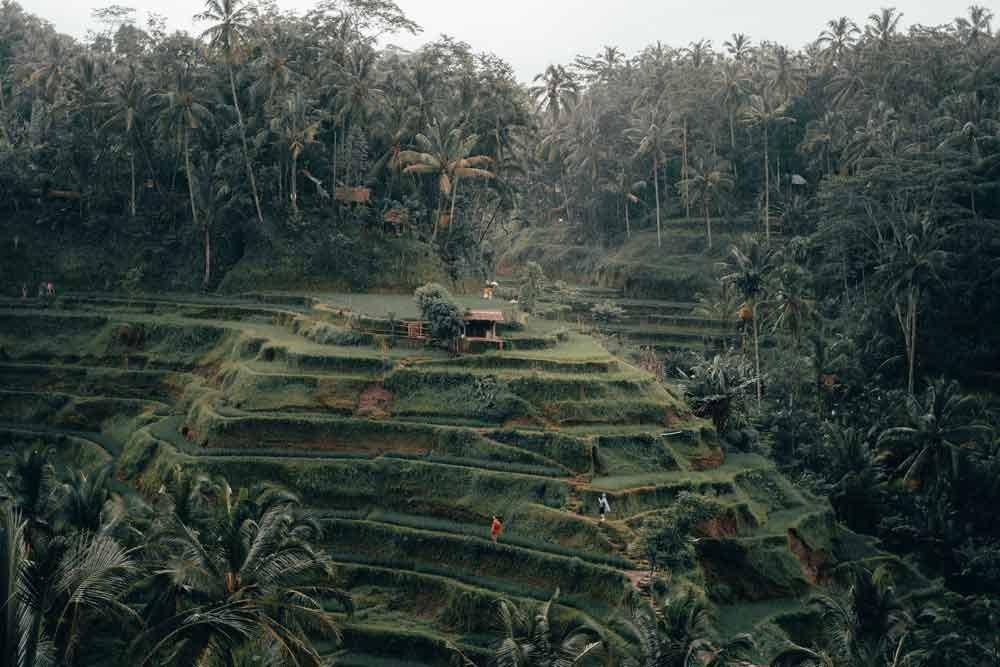 Bali Tegalalang Rice Terrace