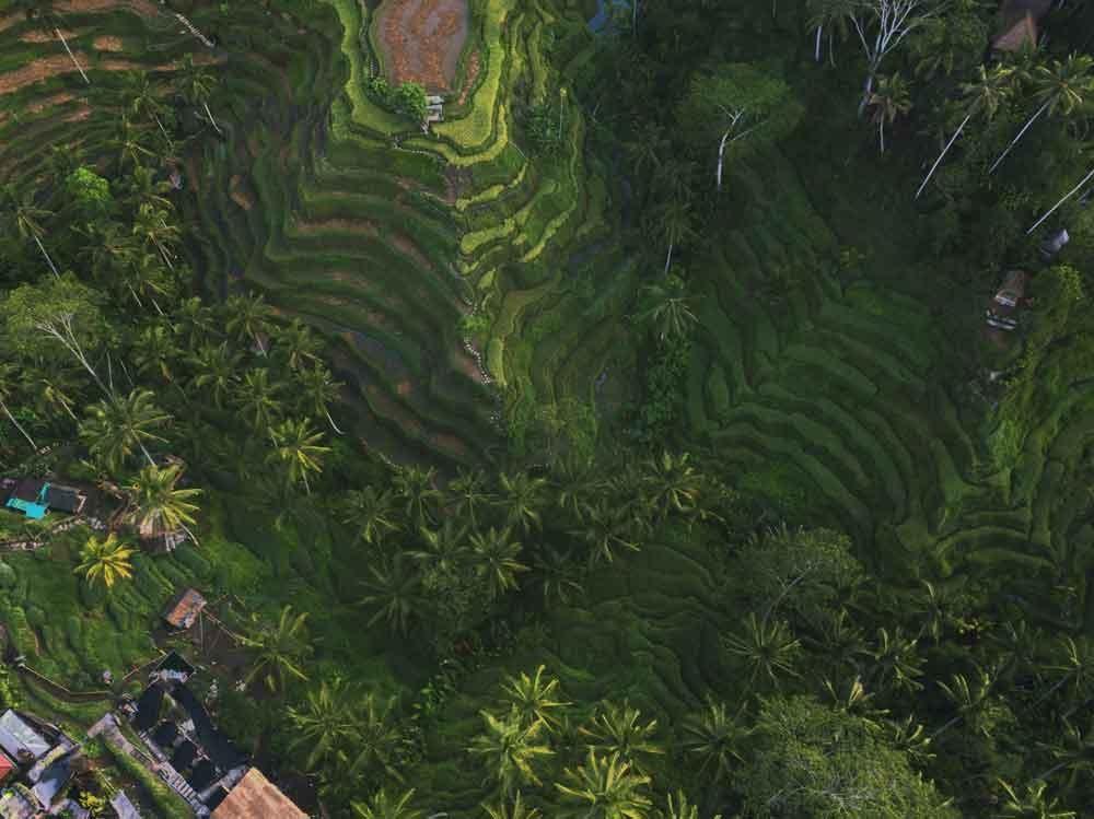 Tegalalang Rice Terrace Entrance Fee