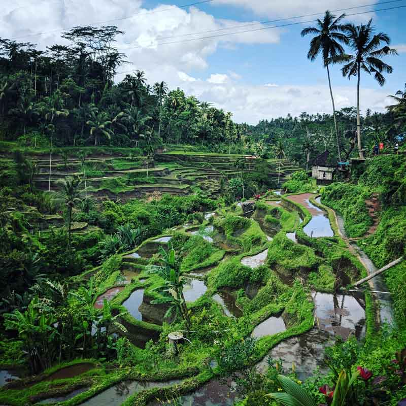 How to Get Tegalalang Rice Terrace with Travelling Time (Detail)