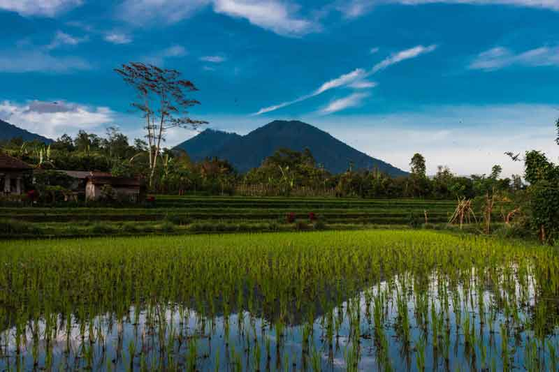 Bali Bukit Jambul Rice Terrace