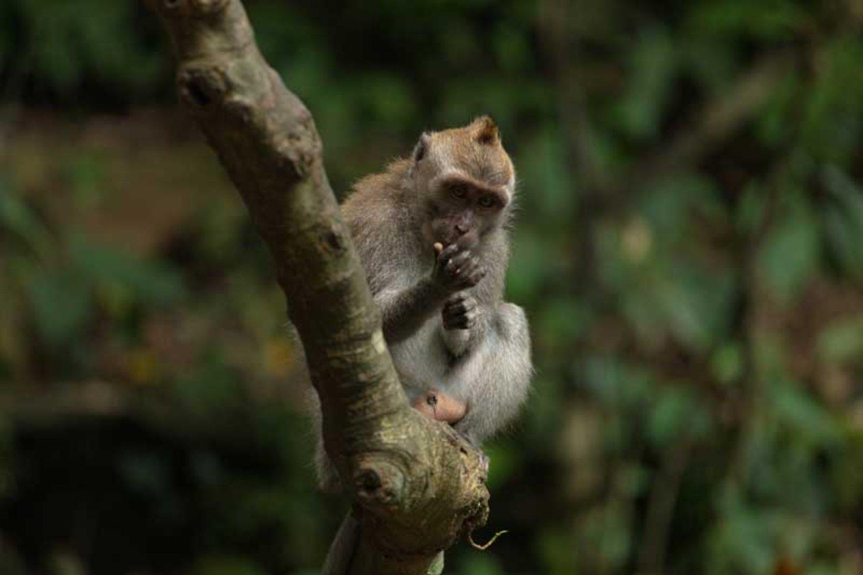 Bali Monkey Forest Ubud