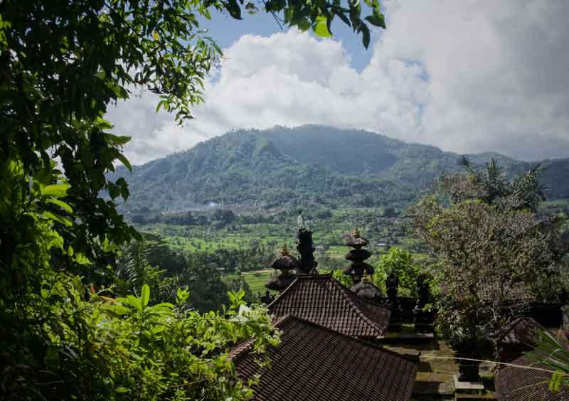 Bali Rendang Rice Field