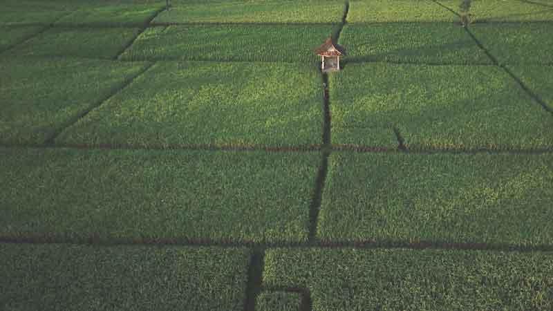 Bali Rice Terrace Pupuan