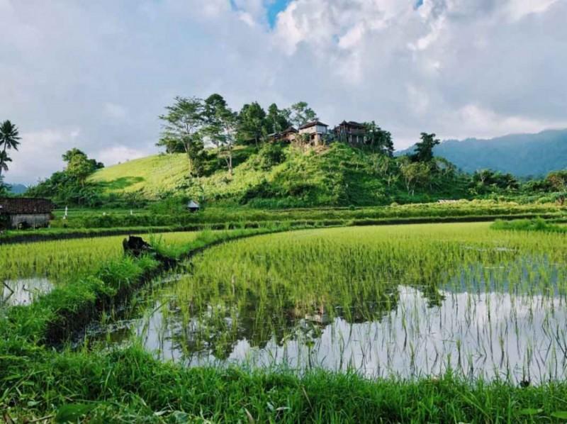 Bali Soka Rice Terrace