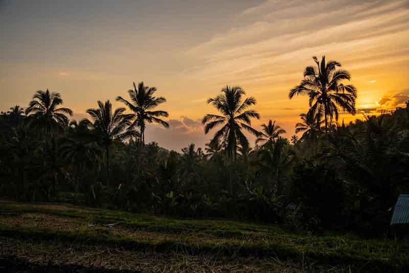 Best Time to Visit Munduk Rice Terrace