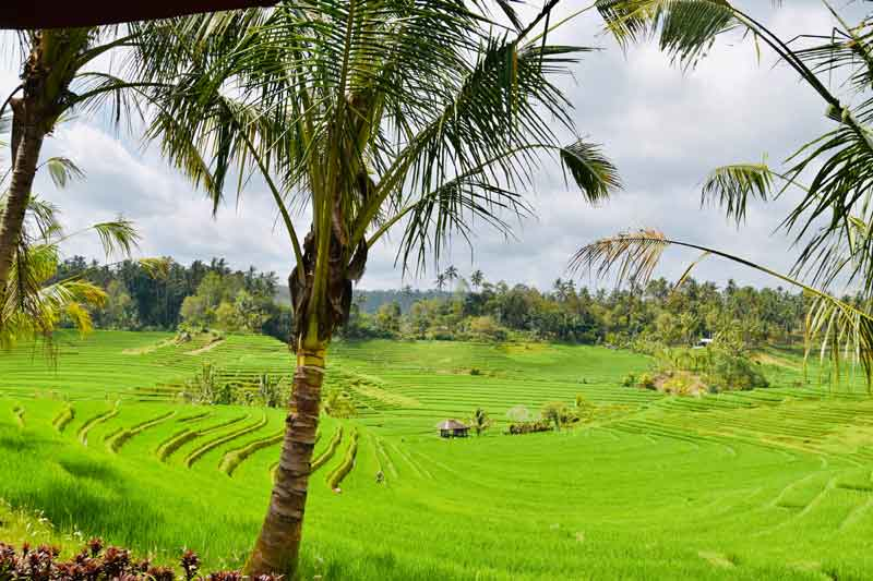 Best Time to Visit Pupuan Rice Terrace