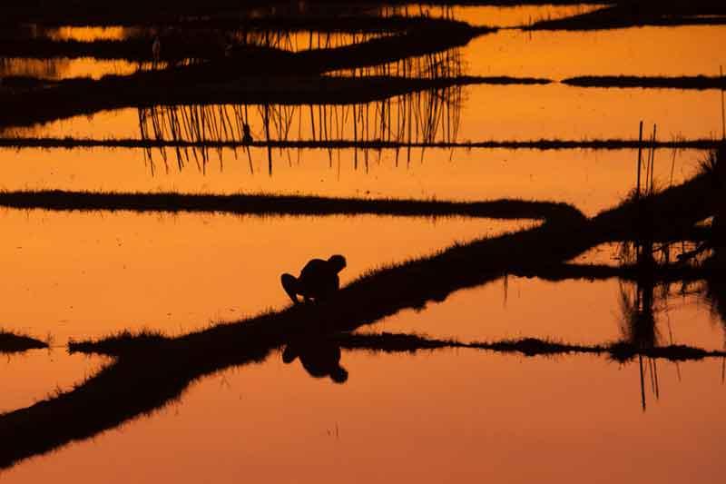 Bukit Jambul Rice Terrace Sunset