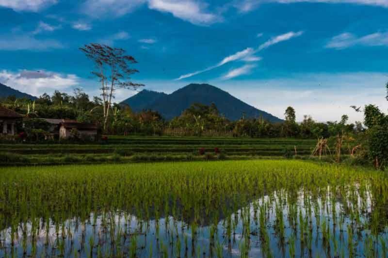 Bukit Jambul Rice Terrace
