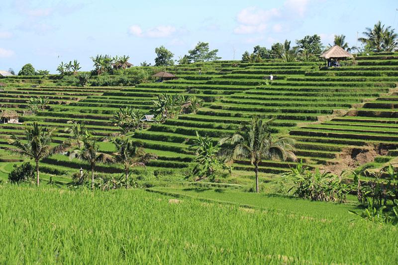 Jati Luwih Green Land Bali