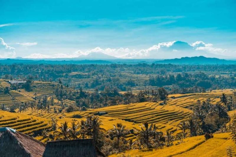 Jatiluwih Rice Terrace Bali Tabanan