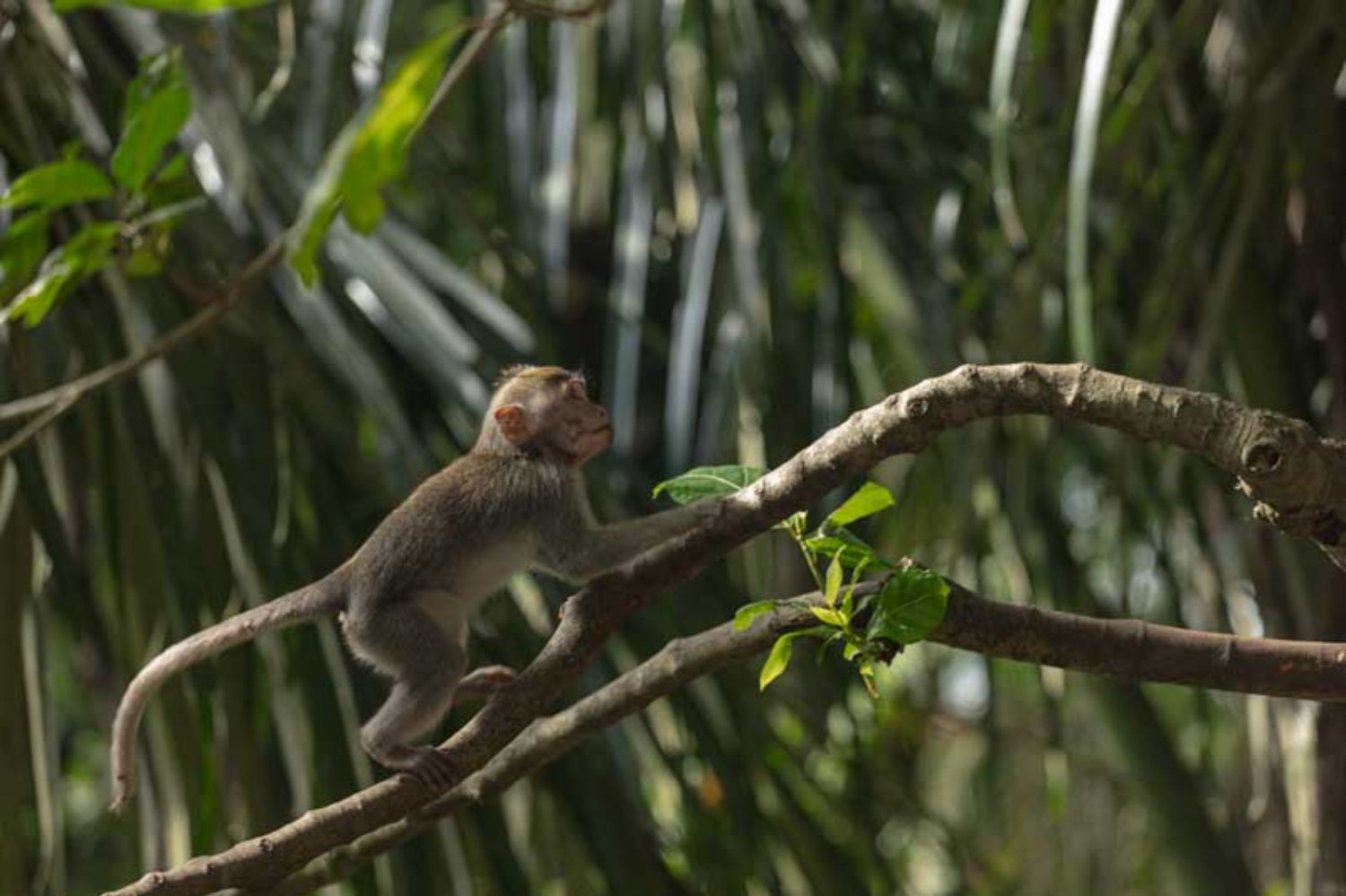 Monkey Forest Attraction in Ubud