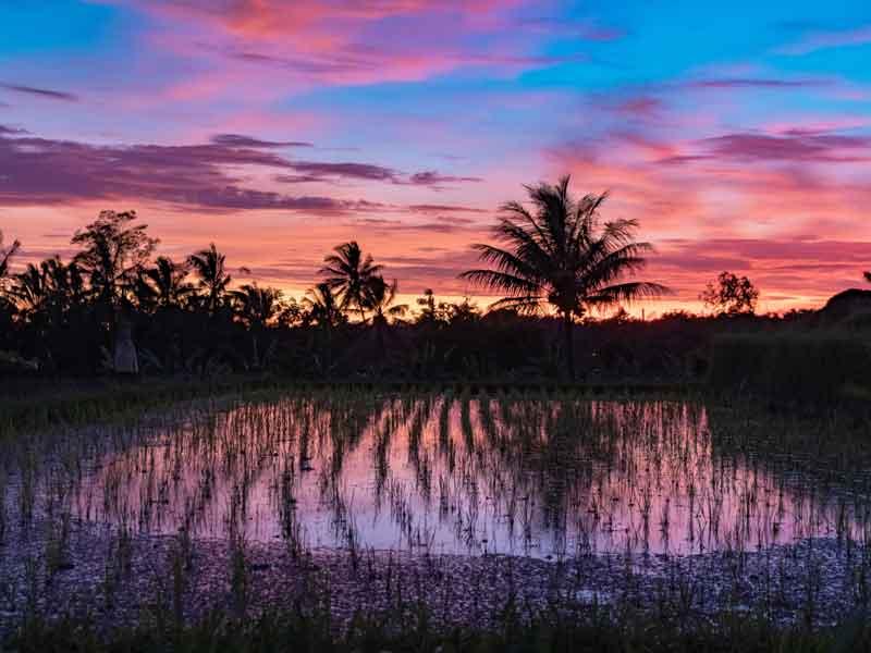 Munduk Rice Terrace Trekking