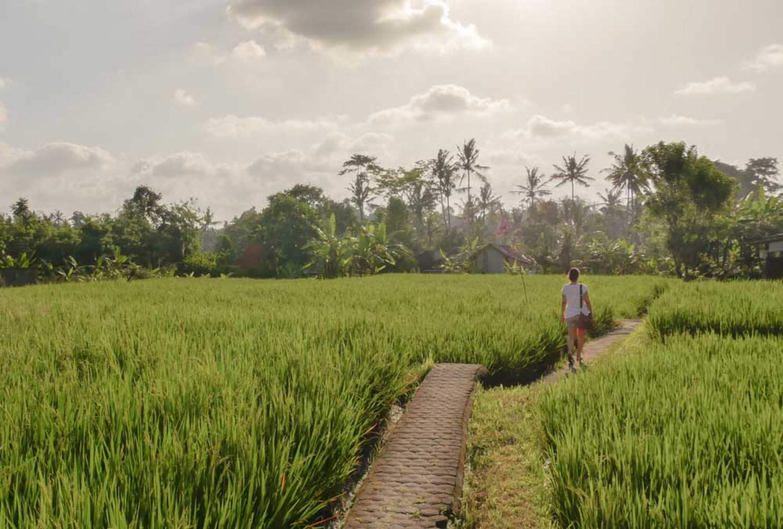 Munduk Rice Terrace
