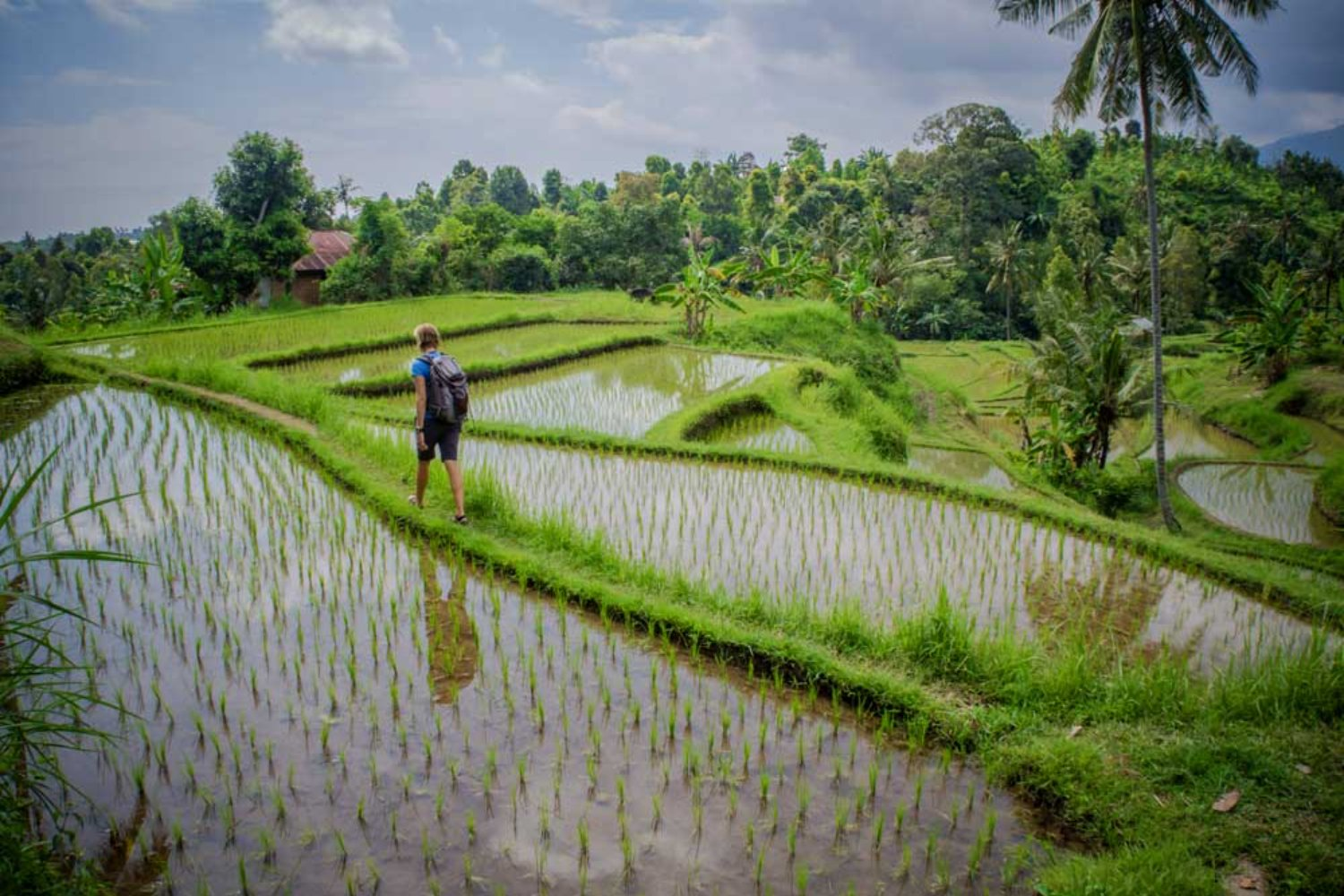 Pacung Rice Terrace