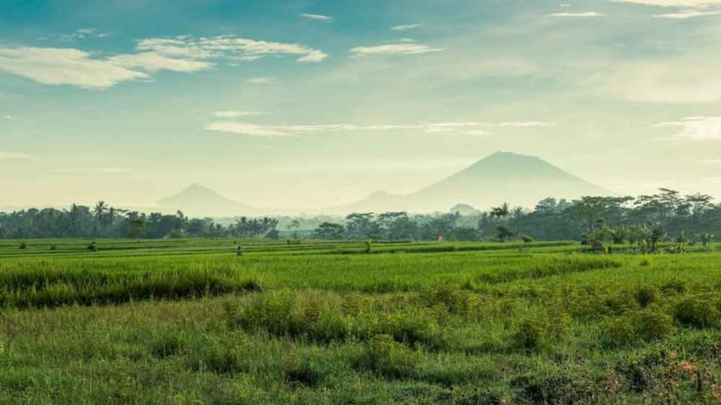 Pupuan Rice Terrace Bali