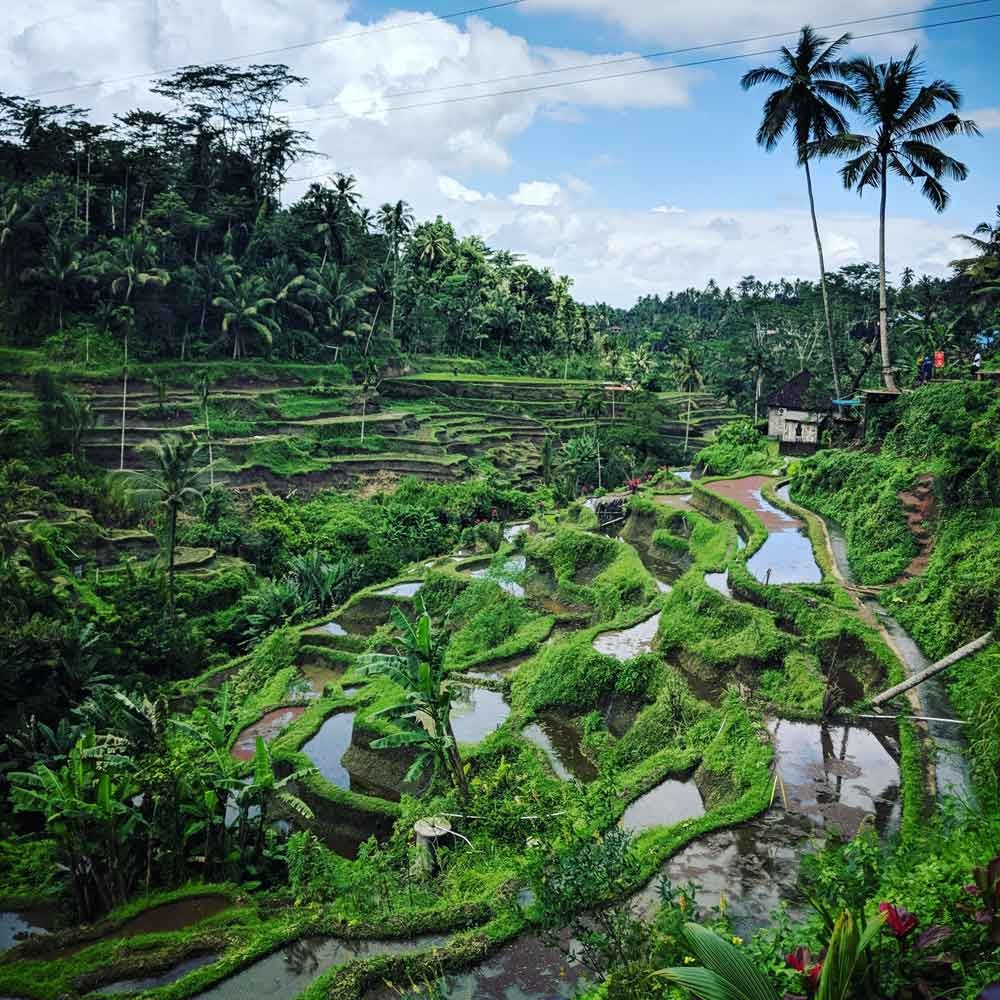 Rice Field Scenery in Tegalalang Ubud