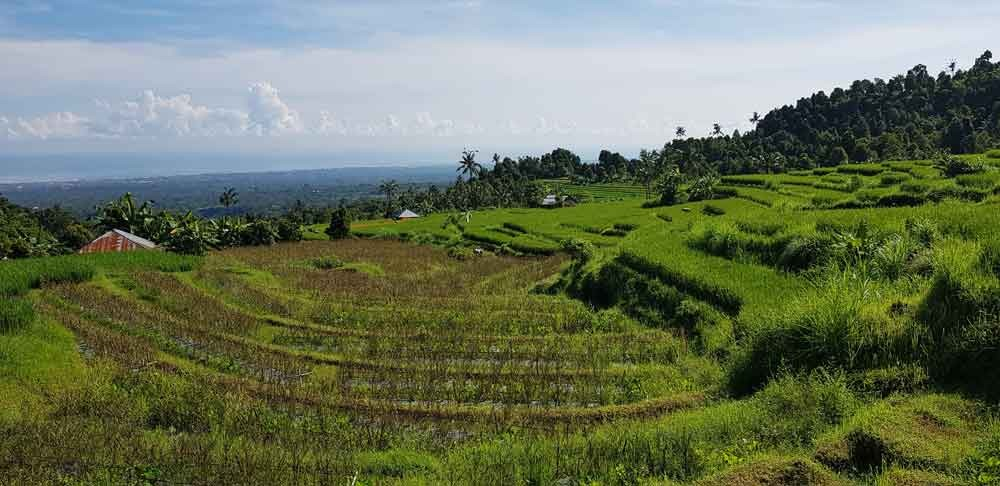 Rice Fields and Plantation at Jatiluwih Rice Terrace