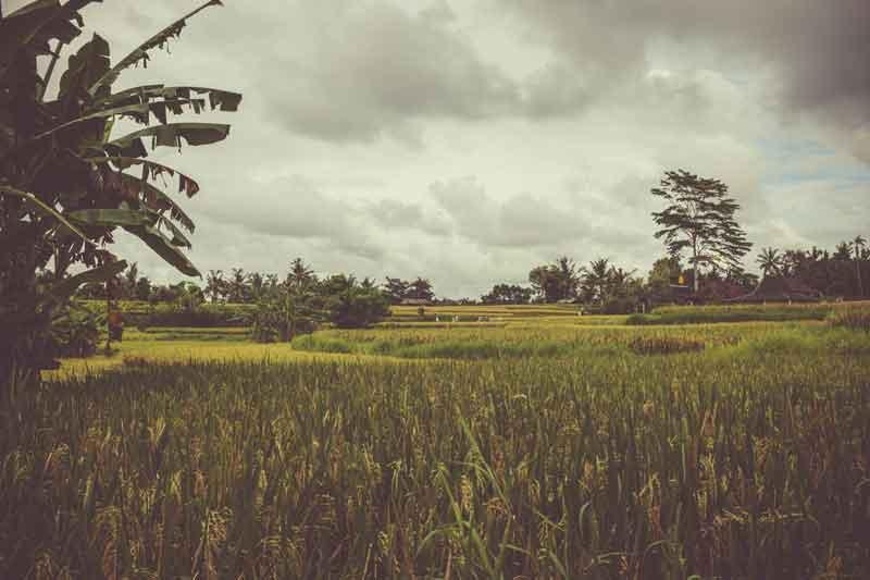 Rice Terrace Bukit Jambul Bali