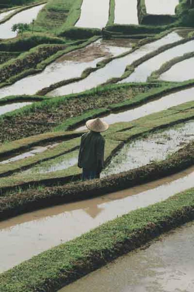 Soka Rice Field Bali