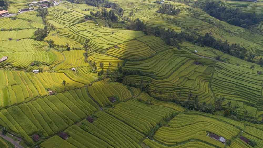 Stunning Rice Fields in Jatiluwih