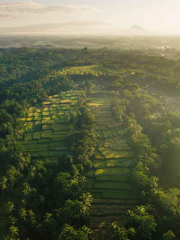 Stunning View of Tegalalang Rice Terrace