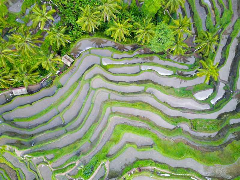 Tegalalang Rice Terrace in The Northern of Ubud