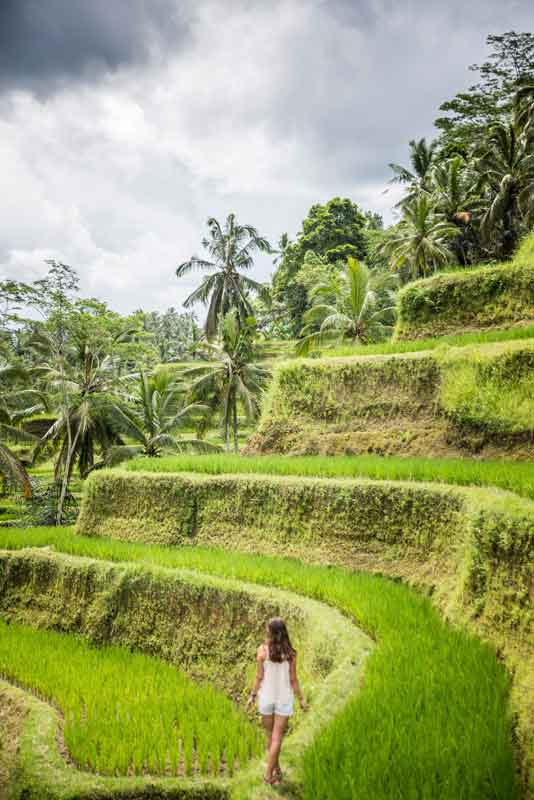 The Woman Walks along Footpath in Tegalalang Rice Terrace
