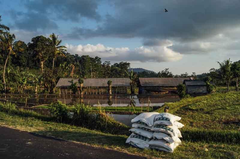 Where is Bali Rendang Rice Terrace