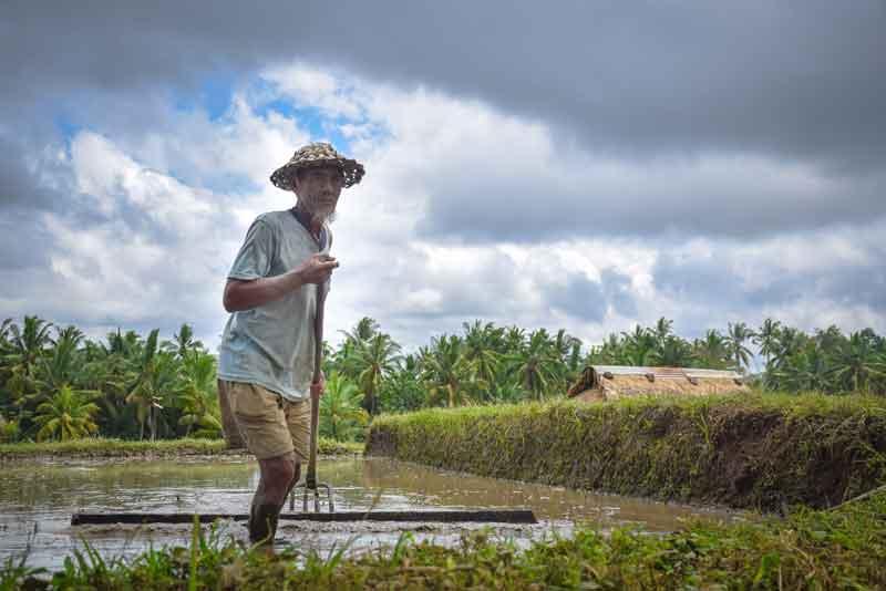 Where is Munduk Rice Terrace