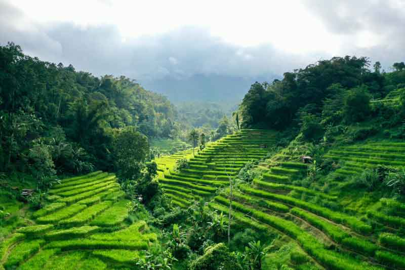 Where is Pupuan Rice Terrace