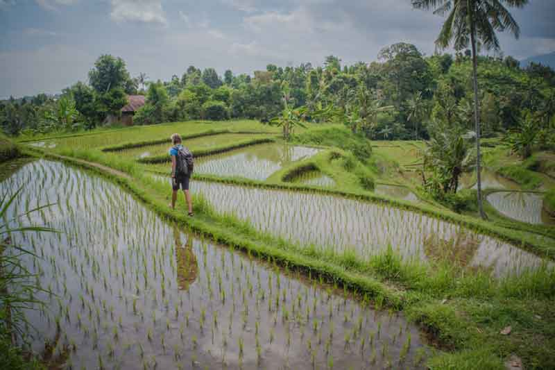 things to do in pacung rice terrace
