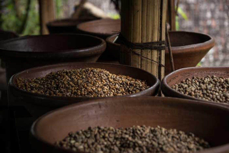 Coffee Producing Areas in Bali besides Kintamani