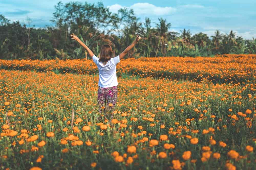 Marigold Flower Garden, The Instagenic Spot You Must Visit in Bali