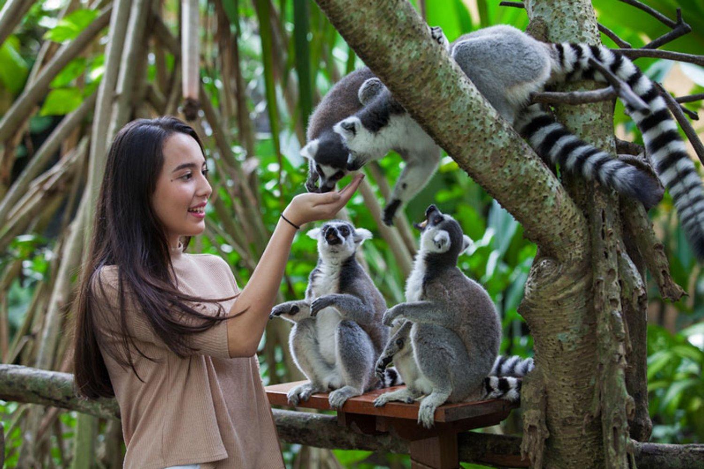 Bali Zoo Park – Harga Tiket Kebun Binatang Bali Terbaru 2021