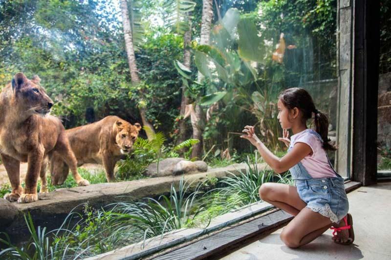 Aktivitas Seru di Bali Zoo Park