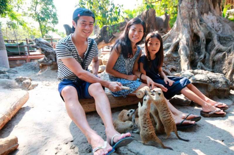 Animal Feeding di Taman Bali Safari