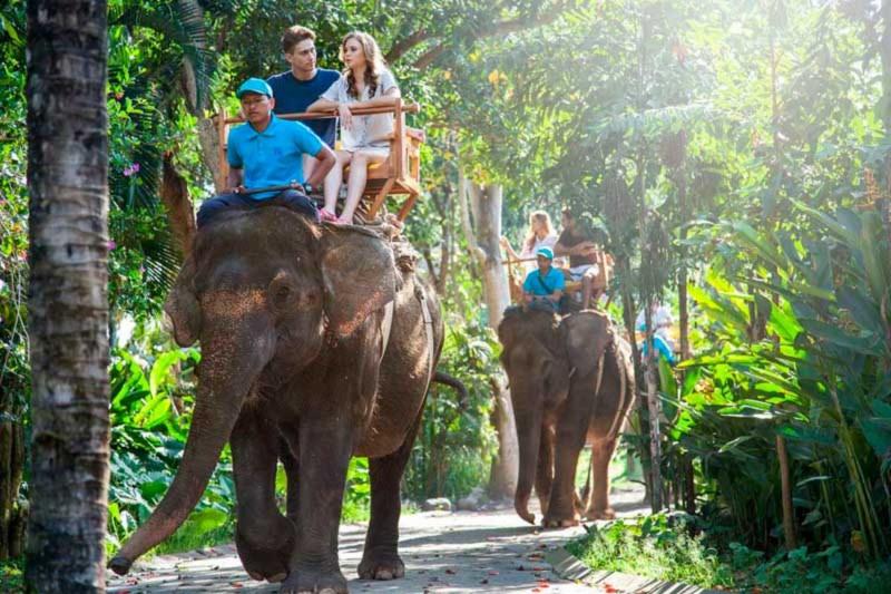 Berkeliling Naik Gajah di Bali Zoo Park