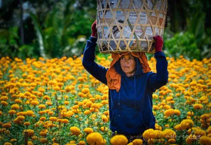 Kebun Bunga Instagenik di Bali - instagramable/mrloverlava