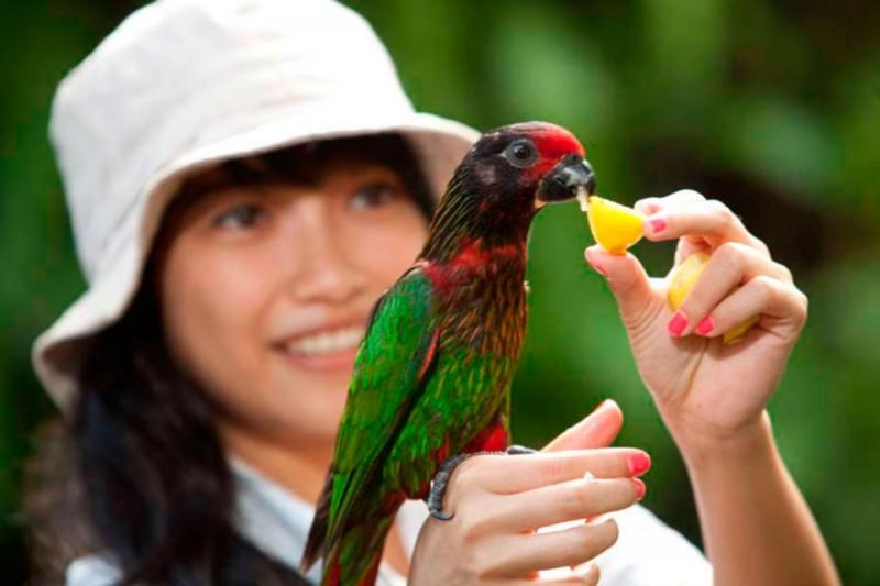 Memberi Makan Burung di Bali Bird Park