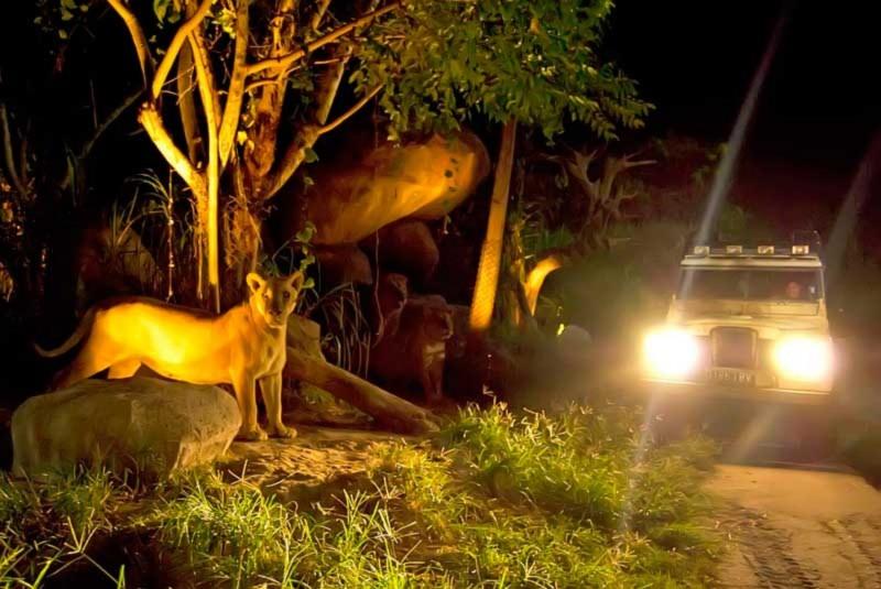 Night Safari di Taman Safari Bali