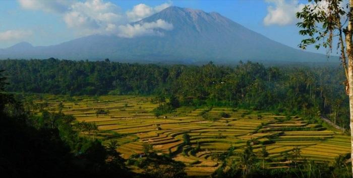 Pemandangan Gunung Agung dan Sawah Dari Restoran Mahagiri Panoramic