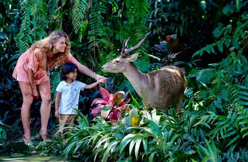 Petting Zoo di Bali Zoo Park