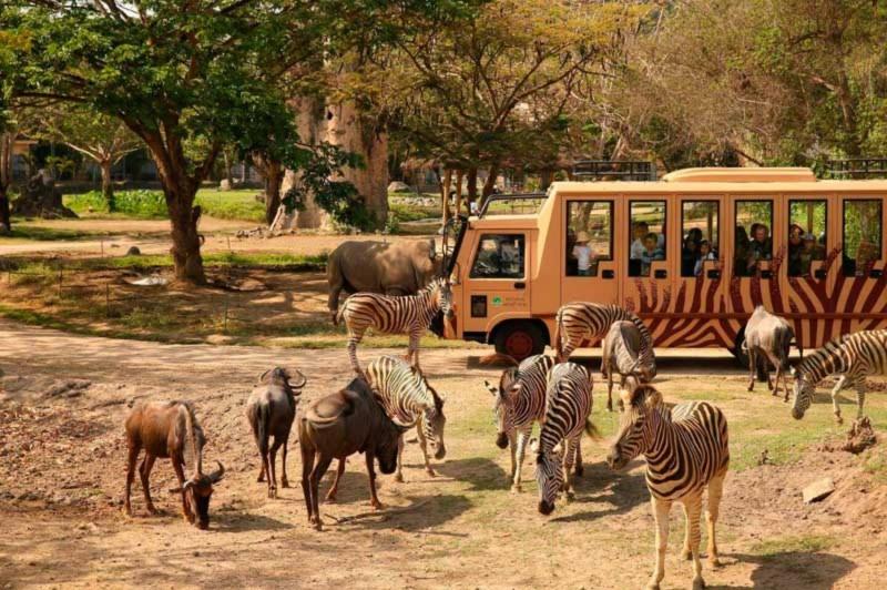 Safari Journey di Taman Safari Bali