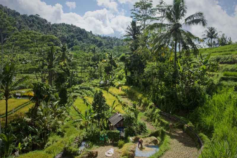Stunning Rice Terrace Expanse at Sidemen Village