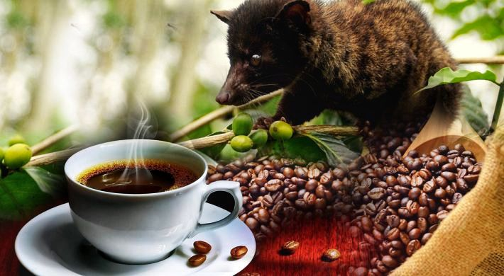 Bali Coffee Plantation in Batur
