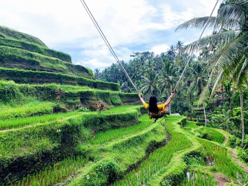 Play A Thrilling Swing While Witnessing Rice Terrace View in Tegalalang